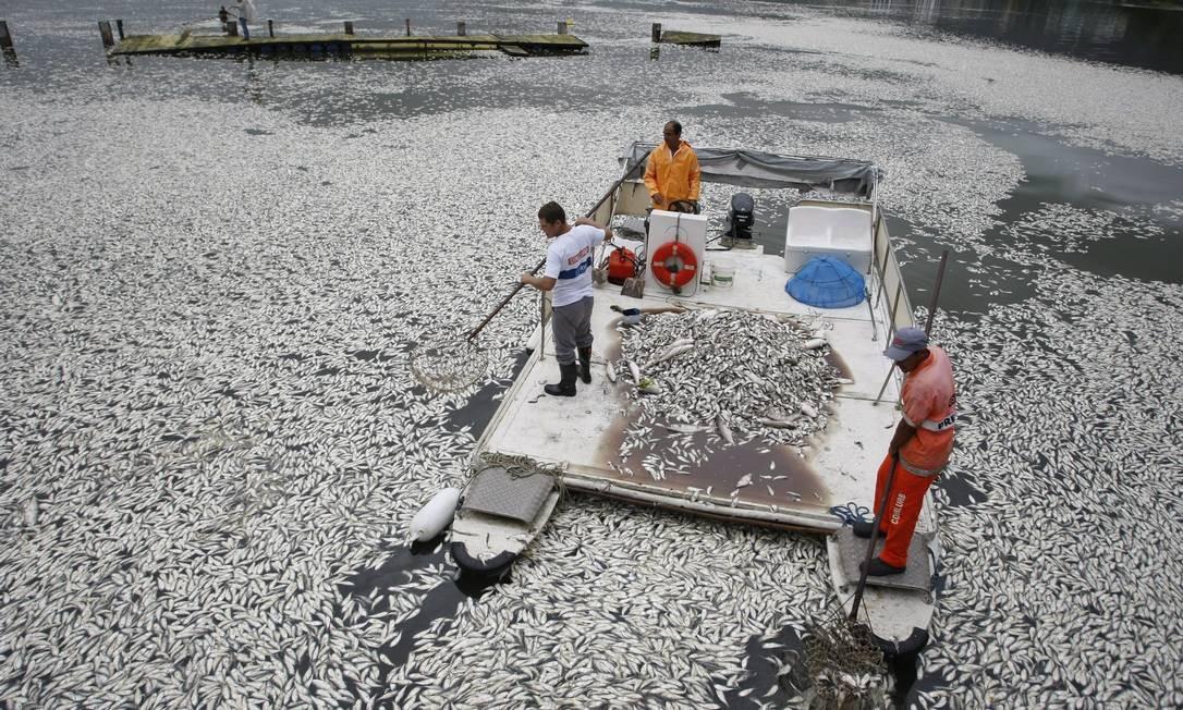 Funcionários da prefeitura recolhem os peixes mortos na Lagoa Rodrigo de Freitas na manhã desta quinta-feira Foto: Hudson Pontes / Agência O Globo