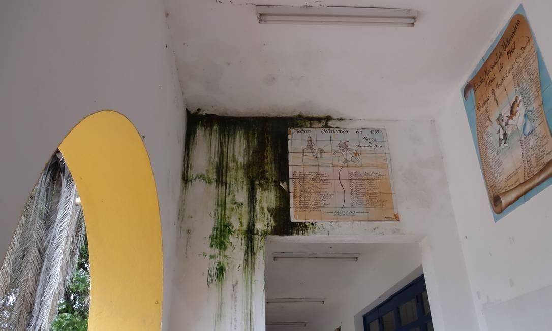 Instalações do alojamento estão tomadas por infiltrações Foto: DCE-UFRRJ/ARQUIVO PESSOAL