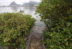 Peixes mortos ainda são vistos em alguns pontos da lagoa como nas margens e próximos às áreas de manguezal Foto: Pedro Kirilos / Agência O Globo