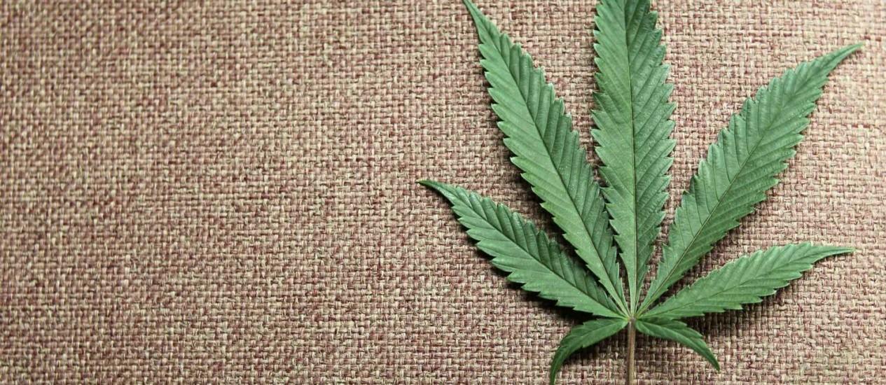 Uma folha de maconha: cresce apoio à legalização nos EUA Foto: ANTHONY BOLANTE / REUTERS