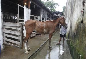 A Secretaria Especial dos Direitos Animais fez uma operação contra maus-tratos de cavalos por charreteiros no início de abril Foto: Marcelo Carnaval / O Globo