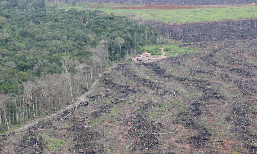 Desmatamento flagrado por fiscais do Ibama no Assentamento Mercedes, na divisa entre Sinop e Tabaporã, em Mato Grosso Foto: Roberto Stuckert Filho / Roberto Stuckert Filho