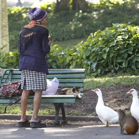 Mulher alimenta gatos, aves e cotia, no Campo de Santana Foto: Marcelo Carnaval