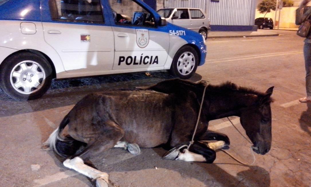 Cavalo é abandonado na Cidade Nova Foto: Bruno Amorim / O Globo