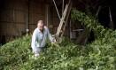 Plantador alemão de lúpulo com sua colheita: demanda pela matéria-prima está em queda Foto: Sascha Kreklau / Barth-Haas Group