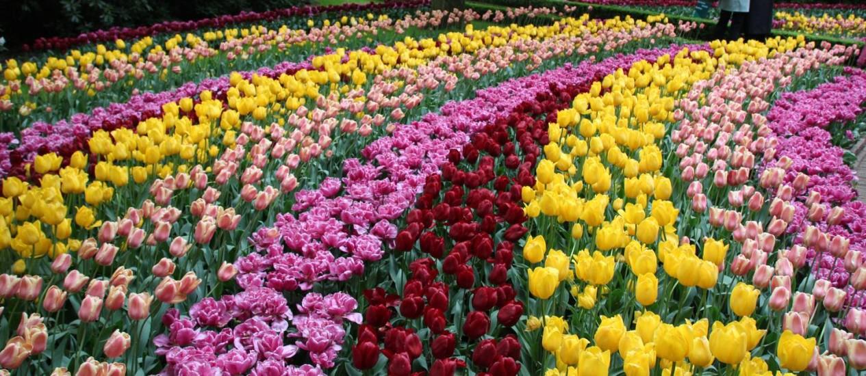 Parque Keukenhof, na Holanda, totalmente florido no último dia da temporada 2013 Foto: Eduardo Maia / O Globo
