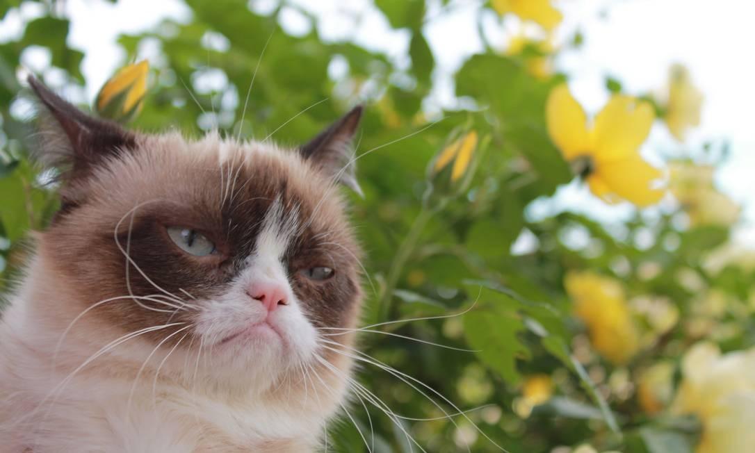 Grumpy Cat já foi perfilada pelo 'New York Times', virou estampa de camiseta e terá livro lançado pela Amazon Foto: Grumpy Cat Limited / Divulgação