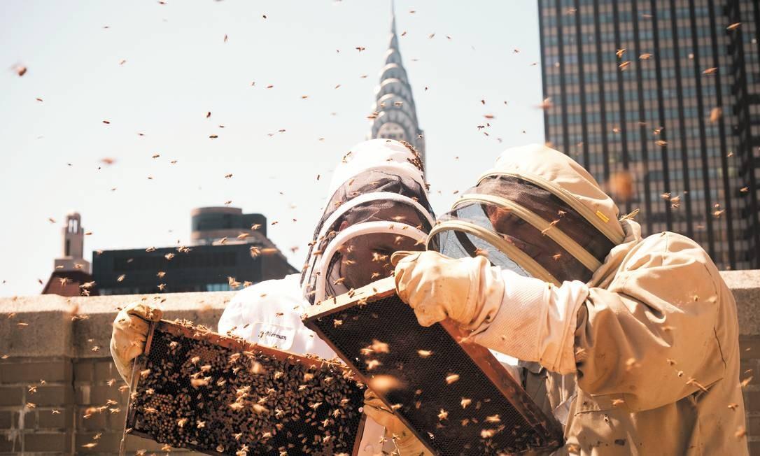 Abelhas do Waldorf Astoria vivem no 20º andar Foto: KAREN MIRANDA RIVADENEIRA/The New York Times