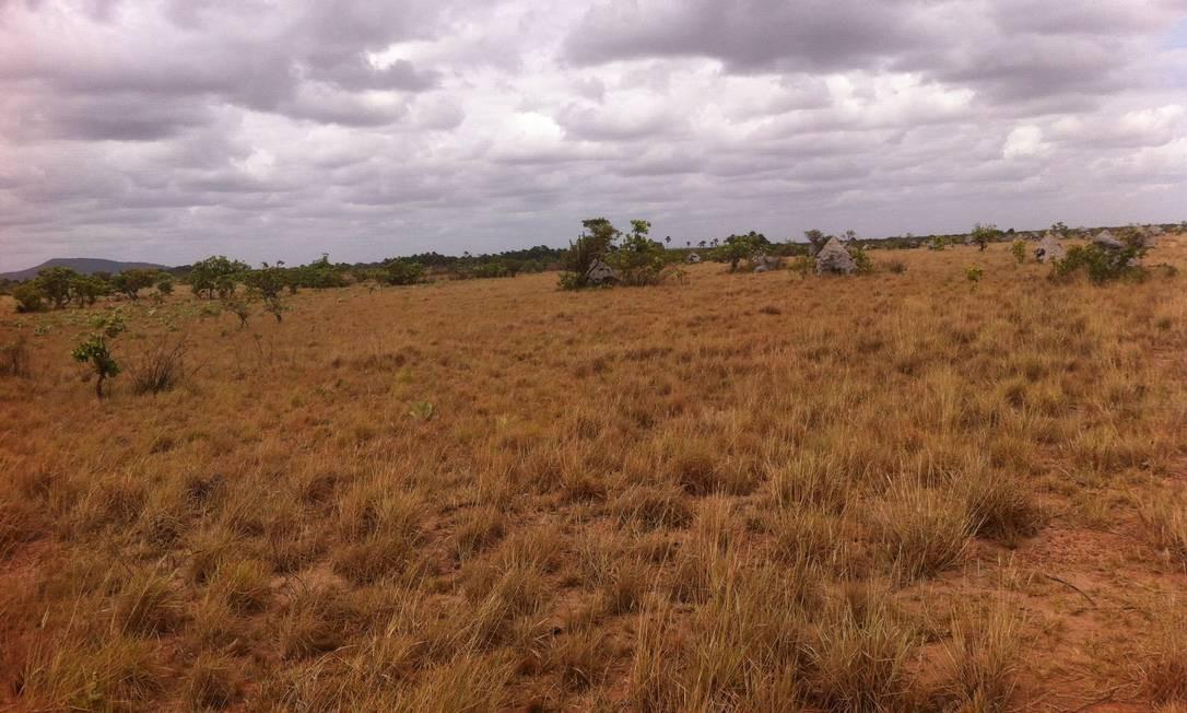 Um projeto do governo do estado de Roraima pretende ocupar a área com criação de gado. A proposta vai ser encaminhada à Funai e às entidades que representam os índios. Foto: Comissão de Integração Nacional, Desenvolvimento Regional e da Amazônia