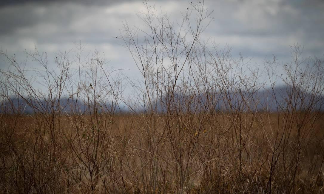 Muitos índios da região trabalhavam para os arrozeiros, que ocupavam menos de 1% da terra. Desempregados, eles passaram a morar na periferia das cidades. Foto: Comissão de Integração Nacional, Desenvolvimento Regional e da Amazônia