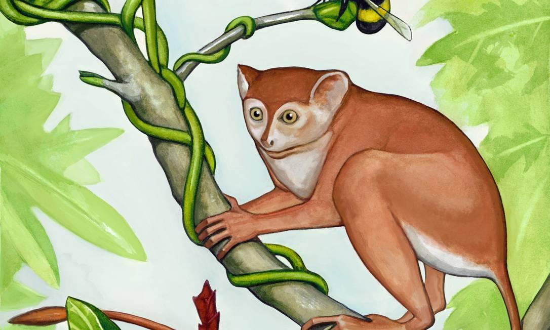 Concepção artística de como o novo primata descoberto, Archicebus achilles, deveria ser Foto: Reprodução