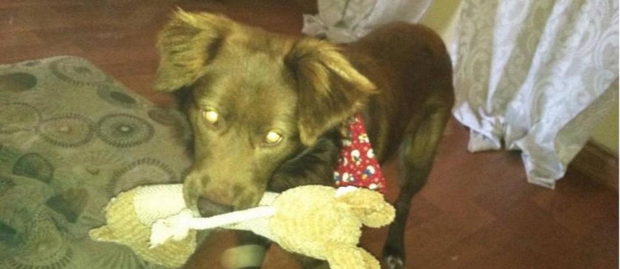 Chili Dog brincando na casa da nova dona Foto: Facebook / Reprodução