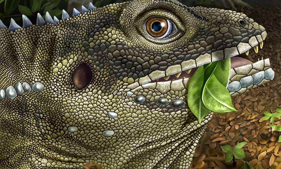 Barbatuex morrisoni: homenagem ao vocalista do The Doors, rei dos lagartos Foto: ANGIE FOX / AFP