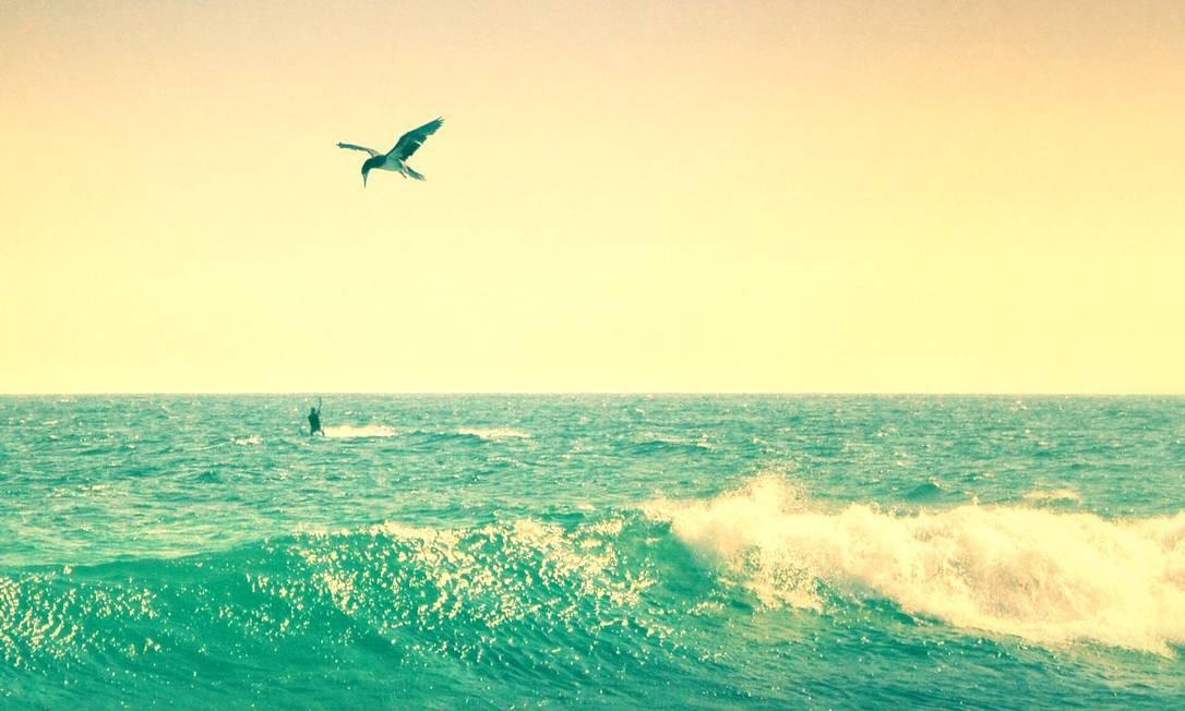 Clique de um dia sem nuvens na Praia da Barra Foto: Divulgação/Flavia Burjato