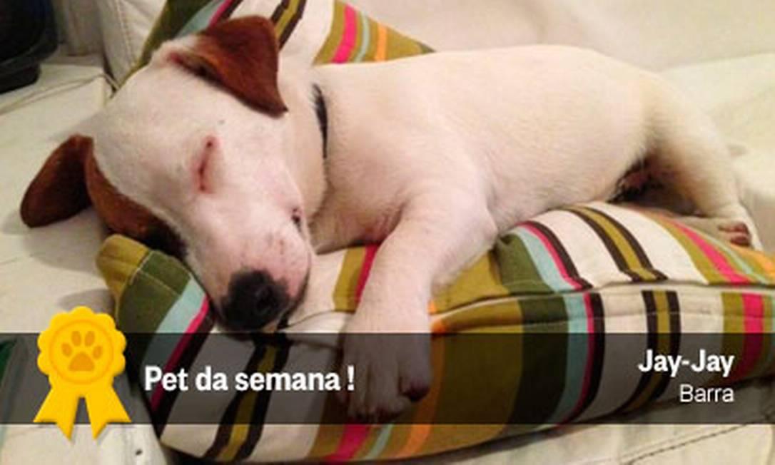 """Jay-Jay, da Barra, é o primeiro vencedor da seção """"Pet do Bairro""""! Foto: Arquivo pessoal"""