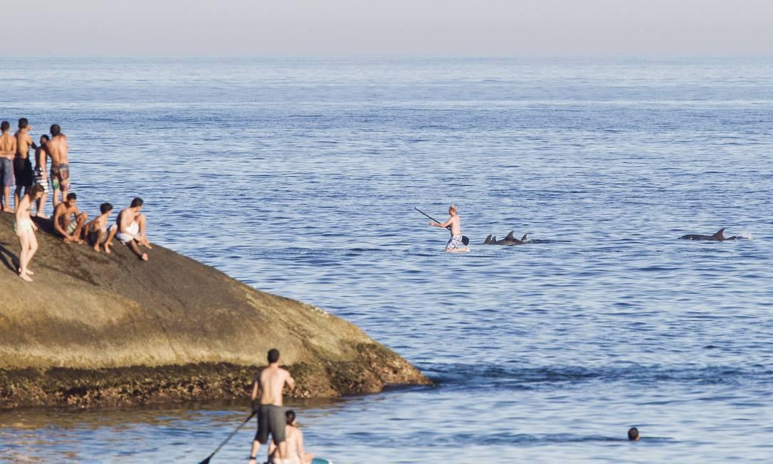 Banhistas e praticantes de stand up paddle observam os golfinhos na praia do Arpoador Foto: Guito Moreto / Agência O Globo