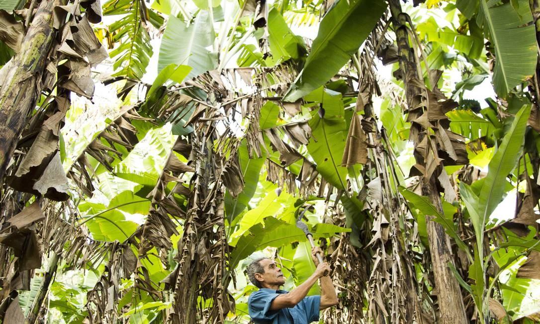 Muitos produtores desistem da agricultura devido à falta de incentivos Foto: Mônica Imbuzeiro / Agência O Globo
