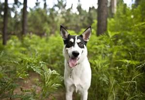 Peony, um dos cachorros da Carolina que tiveram seu DNA estudado na pesquisa Foto: John W. Adkisson/The New York Times