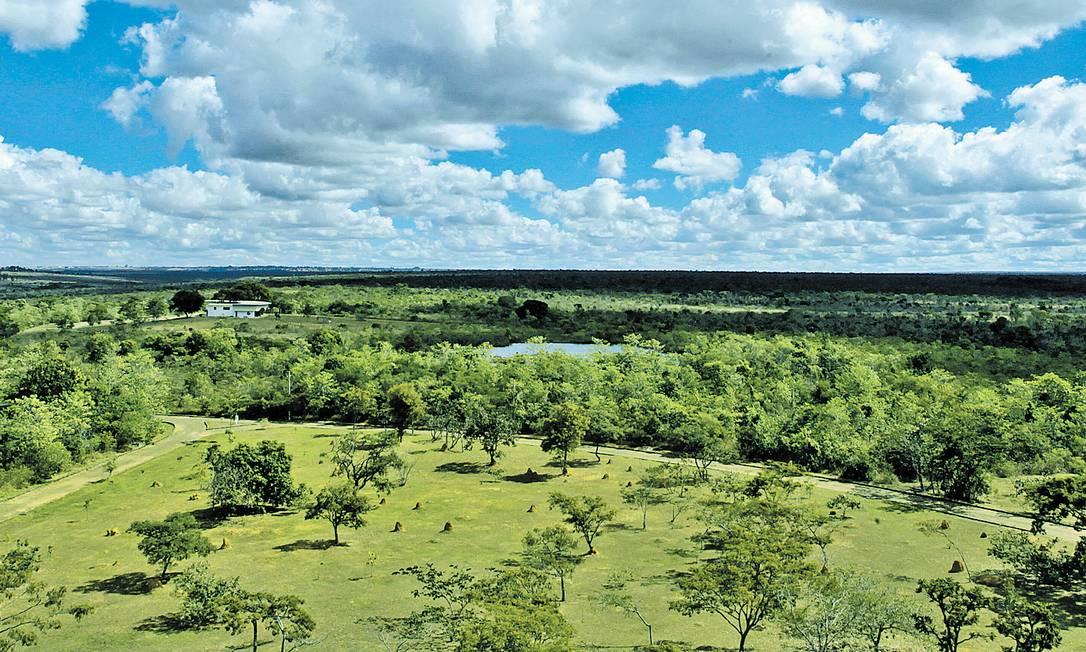 Quase a totalidade da área do Parque Nacional de Brasília é pouco visitada e não conta com estrutura para receber turistas, como trilhas marcadas Foto: André Coelho / André Coelho