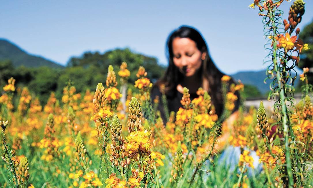 Comércio: A agrônoma Cintia Alves, do Sant Jordi Foto: Mônica Imbuzeiro