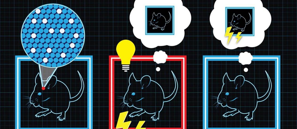 Ilustração mostra como os cientistas encadearam a formação de memórias falsas nos camundongos Foto: Terceiro / Science