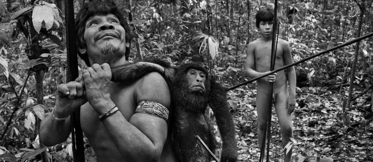 Exímios caçadores, os Awá sobem em árvores de mais de 30 metros de altura para flechar seus alvos Foto: © Sebastião Salgado/Amazonas Images / O Globo