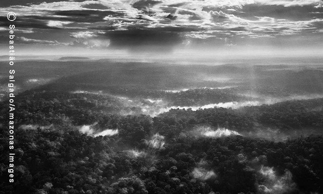 A Reserva Biológica Gurupi foi criada em 1961 por Janio Quadros com 1,6 milhão de hectares. Nesses 52 anos, os limites foram reduzidos, mas a área é duplamente protegida por ser reserva e Terra Indígena Foto: Agência O Globo