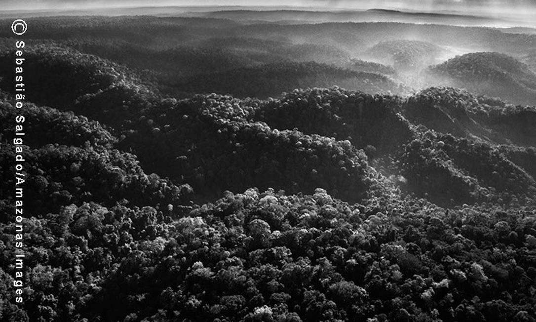 Vista aérea da floresta amazônica, onde o território Awá está localizado. Mesmo com todas as decisões judiciais, ele tem sido desmatado pelos madeireiros e ainda é ocupado por posseiros e grileiros