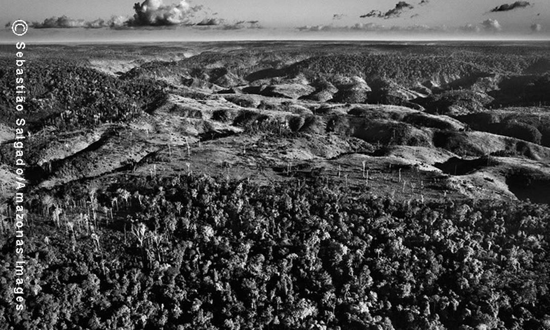 Parte da floresta ainda permanece intacta por causa de seu relevo acidentado, o que torna difícil para os madeireiros ilegais penetrá-la e usar escavadeiras para criar aberturas