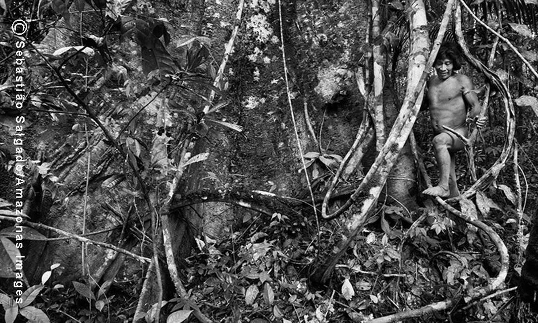 Os Awá foram contatados em 1979 - alguns indivíduos só no final da década de 90 - e há fortes indícios de grupos que permanecem fugindo mata adentro
