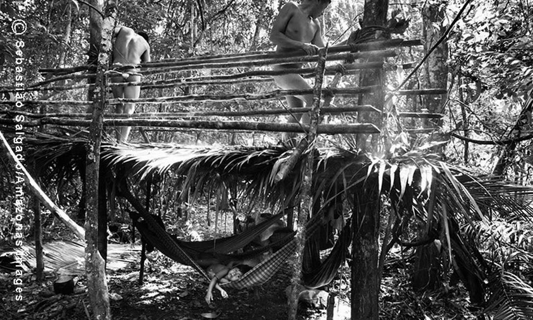 Com a ajuda de um integrante da comunidade Awá, o índio Hiraho prepara a a construção de um abrigo no acampamento de caça, distante dois dias a pé da Aldeia Juriti