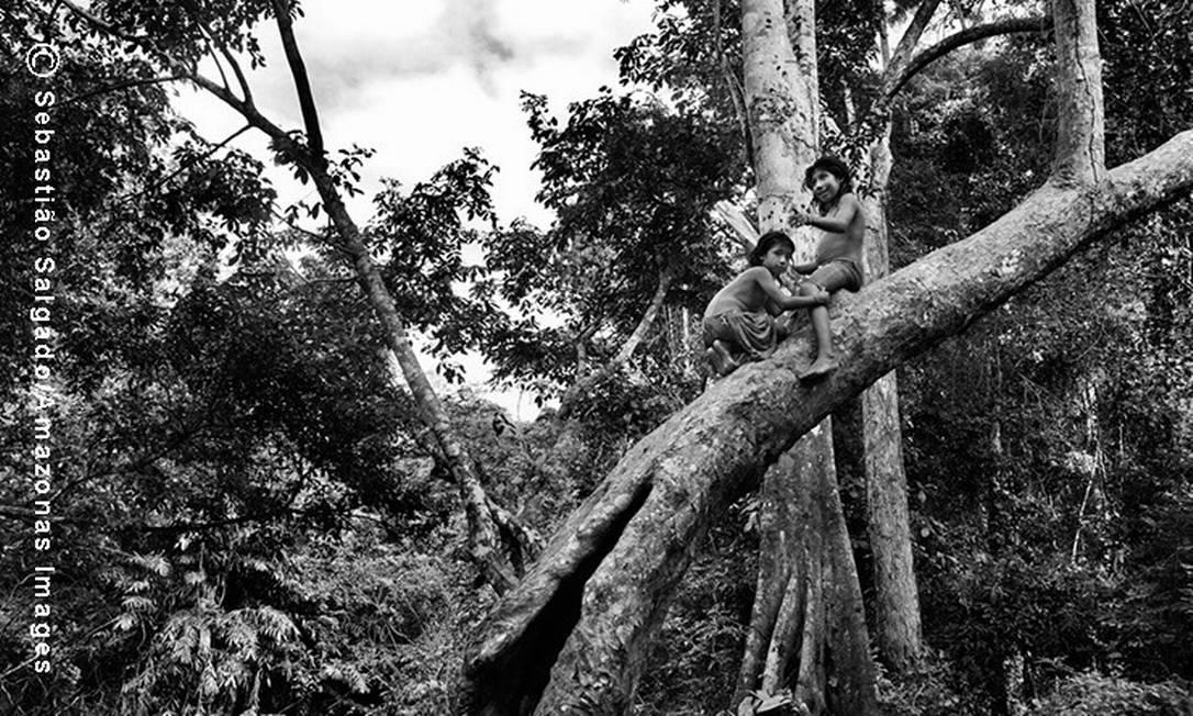 Crianças brincam em árvore próximo ao rio Caru, na Aldeia Juriti