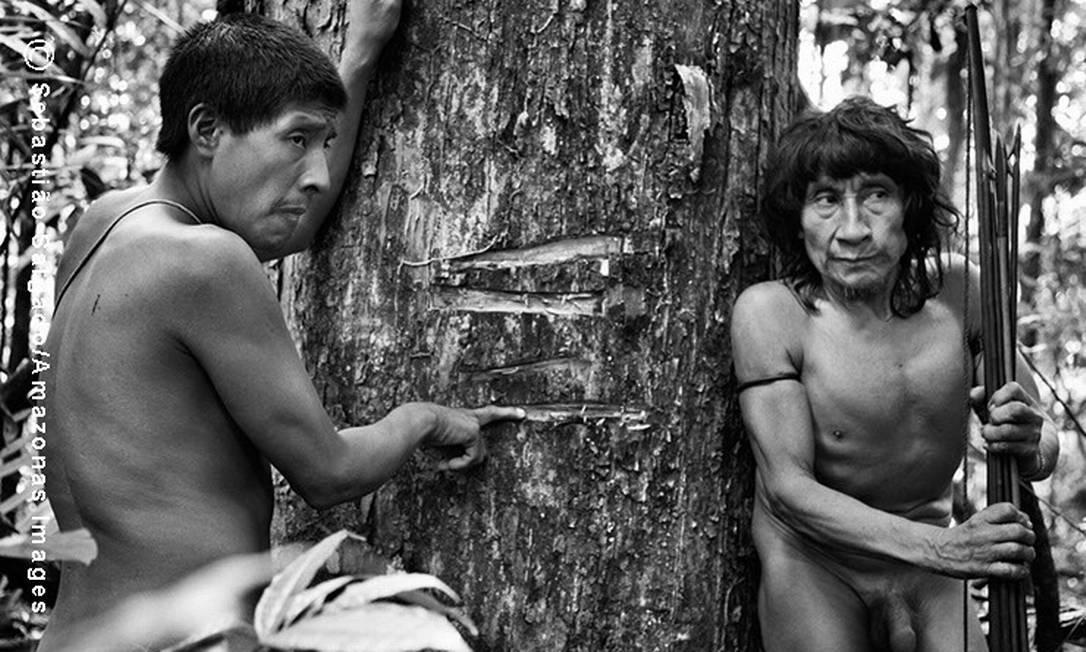 O índio Piraima´a (à esquerda) mostra ao lado de seu pai Pirama´a as marcas feitas pelos madeireiros em um ipê, árvore sagrada para os Awá e altamente valiosa no mercado ilegal
