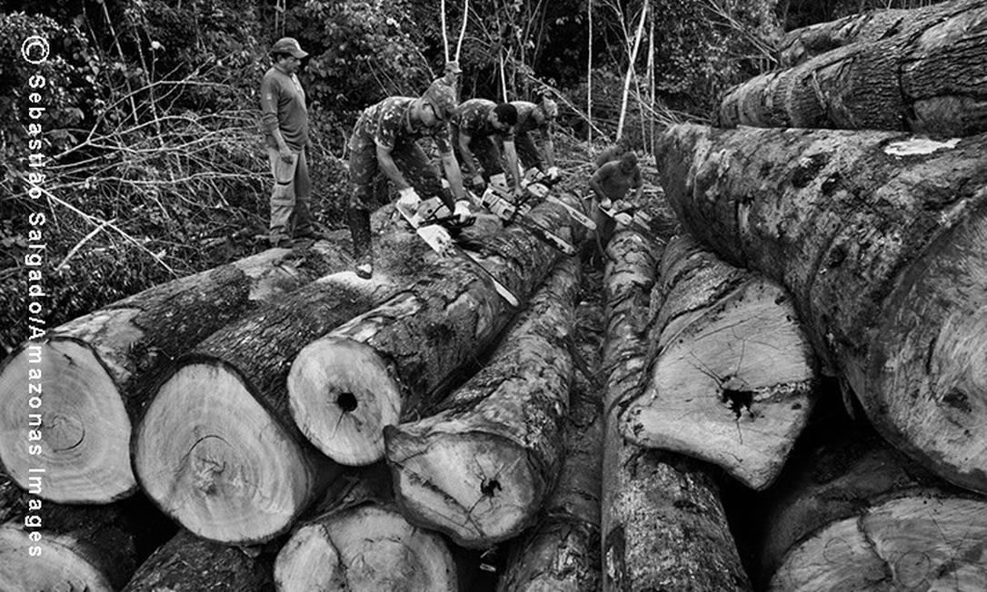 Soldados do Exército brasileiro cortam em pequenos troncos as toras de árvores derrubadas ilegalmente pelos madeireiros, na tentativa de inutilizá-las c