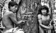 Piraima'a (à esquerda) e seu pai (Pirama'a) mostram marcas feitas por madereiros que invadem a floresta para cortar ilegalmente árvores em terras indígenas. Esse tipo de árvore (Tabebuia) tem alto valor no mercado, mas é também sagrada para os Awá