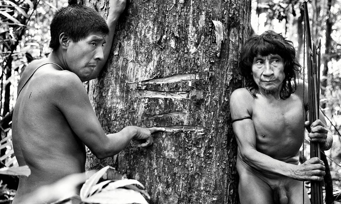 Piraima'a (à esquerda) e seu pai (Pirama'a) mostram marcas feitas por madereiros que invadem a floresta para cortar ilegalmente árvores em terras indígenas. Esse tipo de árvore (Tabebuia) tem alto valor no mercado, mas é também sagrada para os Awá Foto: © Sebastião SALGADO / Amaz / Sebastião Salgado