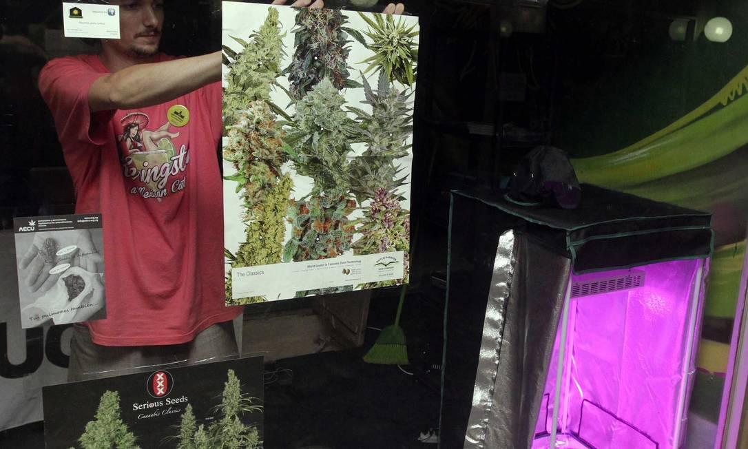 Na loja Urugrow, em Montevidéu, cartazes com a planta cannabis na vitrine Foto: ANDRES STAPFF / REUTERS/17-12-2012