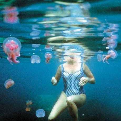 Venenosa: espécie 'Pelagia noctiluca' é abundante na costa espanhola Foto: Latinstock