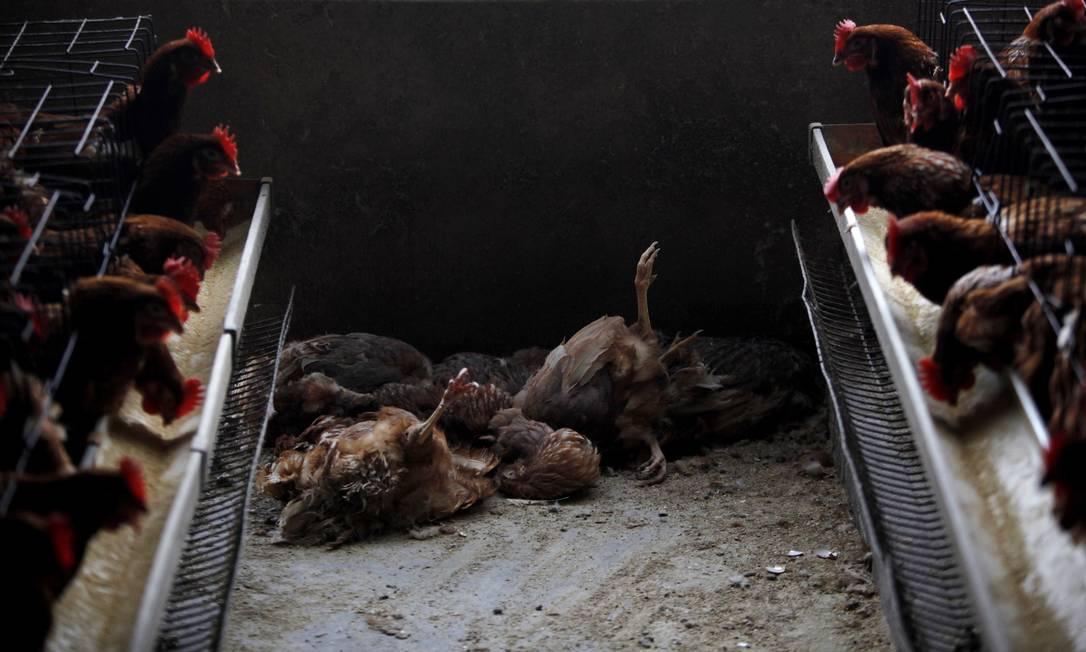 Galinhas mortas são vistas em mercado de Xangai, na China. Depois de surto, autoridades fecharam estes estabelecimentos Foto: ALY SONG / REUTERS