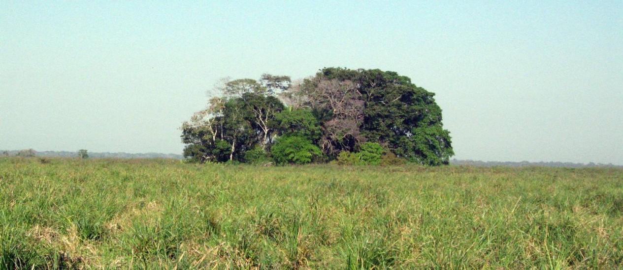 Vista da Ilha do Tesoro, cercada de savana, onde foram encontrados vestígios arqueológicos Foto: Umberto Lombardo/Divulgação