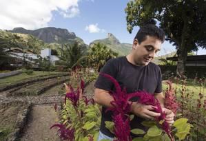 O chef Rafael Costa e Silva tem uma horta no Itanhangá Foto: Foto: Daniela Dacorso