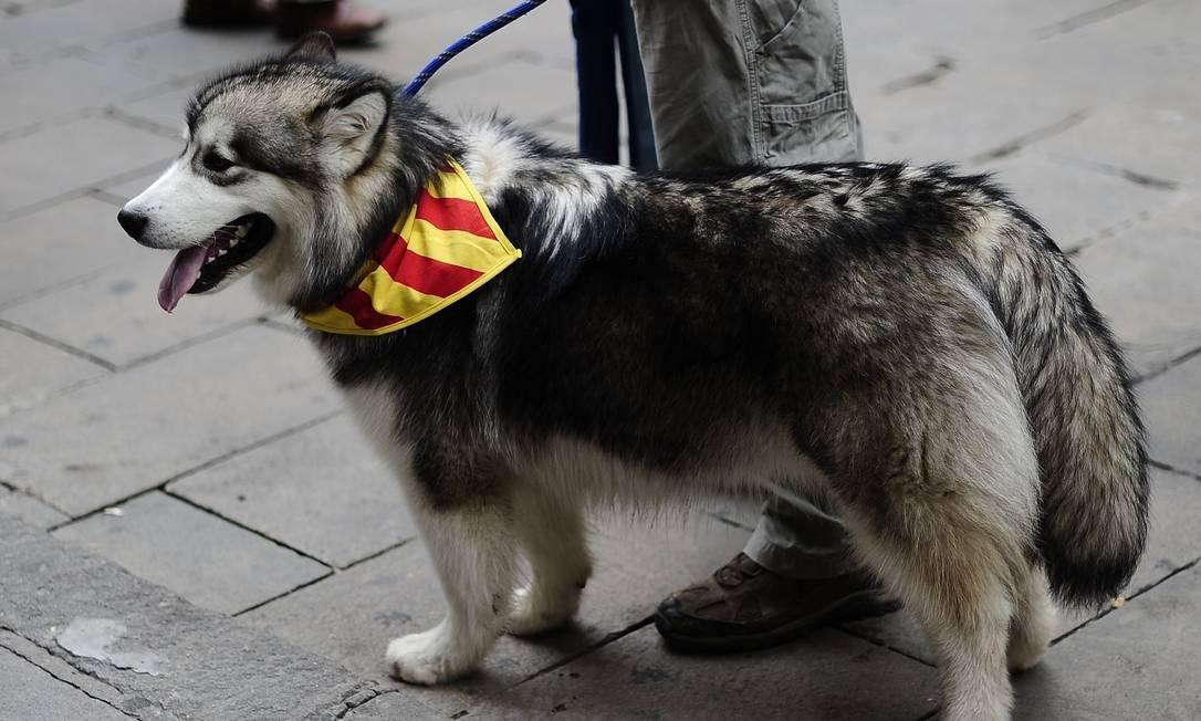 Outro cãozinho também compareceu à manifestação com seu dono Foto: JOSEP LAGO / AFP