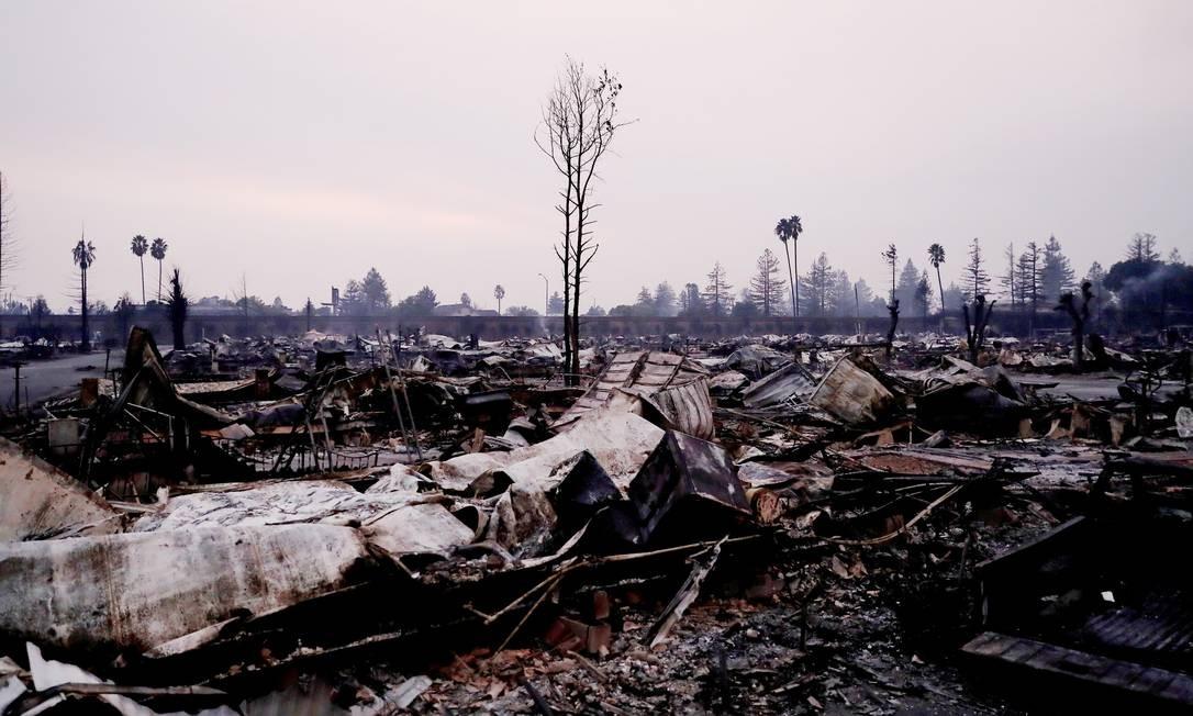 Árvore queimada em meio à destruição de incêndio em Santa Rosa STEPHEN LAM / REUTERS