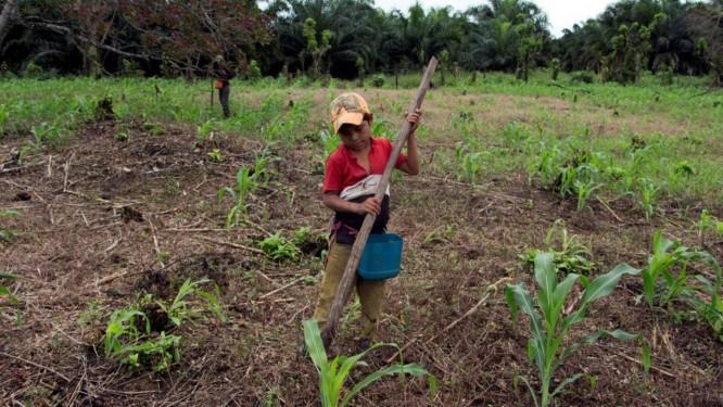 Jorge Francisco Macz, 9, semeia milho perto de uma plantação de palma na cidade onde vivia Jakelin, uma menina de 7 anos que morreu sob custódia americana Foto: Stringer . / REUTERS