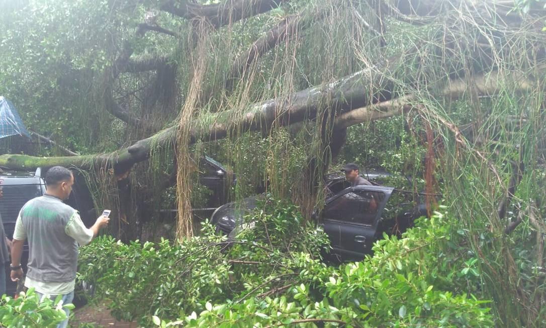 Carros atingidos por árvores em Laranjeiras Foto: Foto enviada por leitor