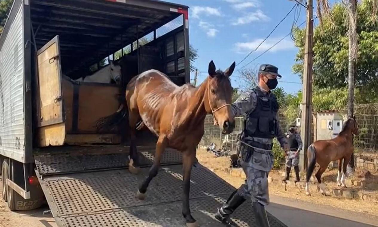 Cavalaria também está sendo utilizada para reforçar as buscas Foto: Secretaria de Segurança Pública de Goiás / Reprodução