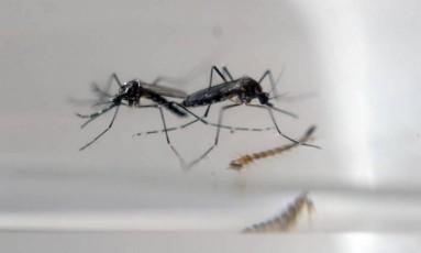 Informação sobre focos do mosquito é aliada ao combate, segundo especialista Foto: AFP