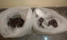 Pílulas estavam no estômago de presos no aeroporto Foto: Divulgação/PRF