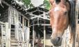 A cocheira onde charreteiros de Paquetá abrigam os animais