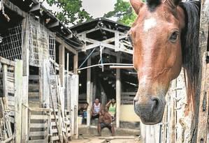 A cocheira onde charreteiros de Paquetá abrigam os animais Foto: Márcio Menasce / Agência O Globo